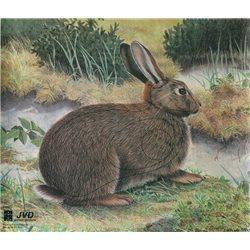Terč králík