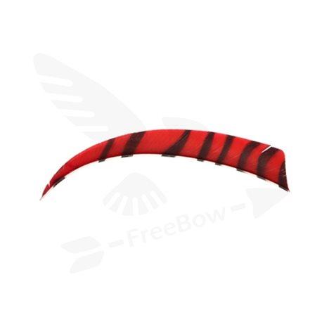 Perutě zebra, červeno-černé